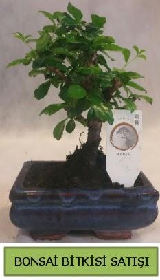 Bonsai ithal görsel minyatür japon ağacı  Gaziantep çiçek online çiçek siparişi