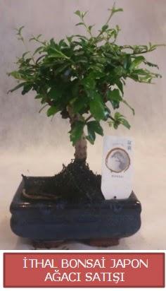 İthal küçük boy minyatür bonsai ağaç bitkisi  Gaziantep 14 şubat sevgililer günü çiçek