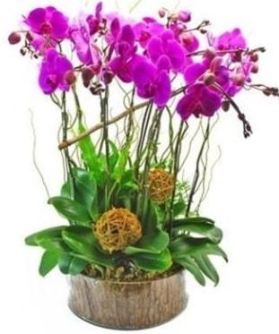 Ahşap kütükte lila mor orkide 8 li  Gaziantep güvenli kaliteli hızlı çiçek