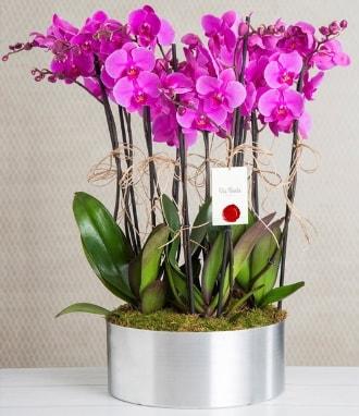 11 dallı mor orkide metal vazoda  Gaziantep cicek , cicekci
