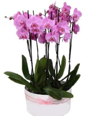 Beyaz seramik içerisinde 7 dallı mor orkide  Gaziantep 14 şubat sevgililer günü çiçek