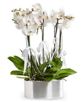 Beş dallı metal saksıda beyaz orkide  Gaziantep cicekciler , cicek siparisi