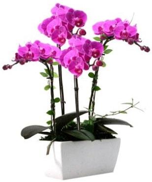 Seramik vazo içerisinde 4 dallı mor orkide  Gaziantep anneler günü çiçek yolla
