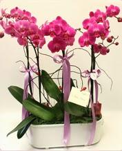 Beyaz seramik içerisinde 4 dallı orkide  Gaziantep çiçek online çiçek siparişi