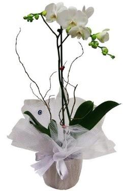 Tek dallı beyaz orkide  Gaziantep çiçek gönderme sitemiz güvenlidir