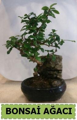 Bonsai ağacı japon ağacı satışı  Gaziantep çiçek servisi , çiçekçi adresleri