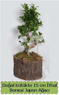 Doğal kütükte İthal bonsai japon ağacı  Gaziantep uluslararası çiçek gönderme