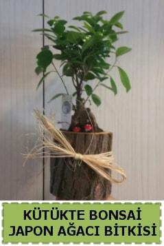 Kütük içerisinde doğal bonsai ağacı  Gaziantep 14 şubat sevgililer günü çiçek