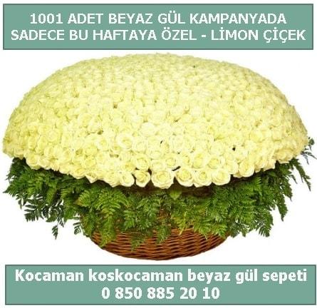 1001 adet beyaz gül sepeti özel kampanyada  Gaziantep cicek , cicekci