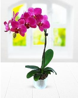 Tek dallı mor orkide  Gaziantep anneler günü çiçek yolla