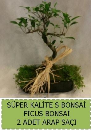 Ficus S Bonsai ve arap saçı  Gaziantep 14 şubat sevgililer günü çiçek