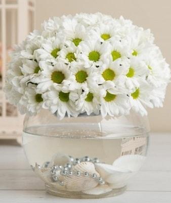 Fanusta beyaz Papatya  Gaziantep anneler günü çiçek yolla