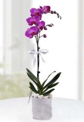 Tek dallı saksıda mor orkide çiçeği  Gaziantep yurtiçi ve yurtdışı çiçek siparişi