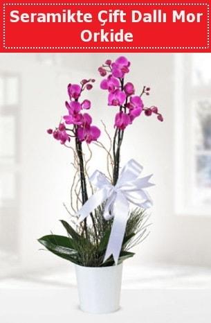 Seramikte Çift Dallı Mor Orkide  Gaziantep çiçek satışı
